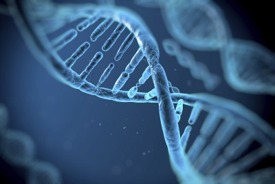 According to a new study, DNA does not affect how strong your immune system is.