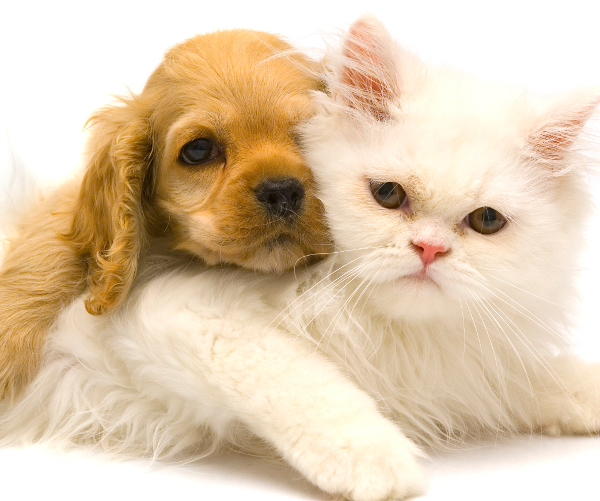 Puppy_and_Kitten