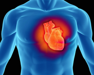 coQ10-helps-your-heart