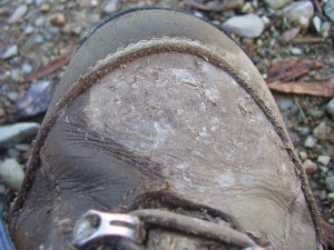 hiking-boot-694299_640