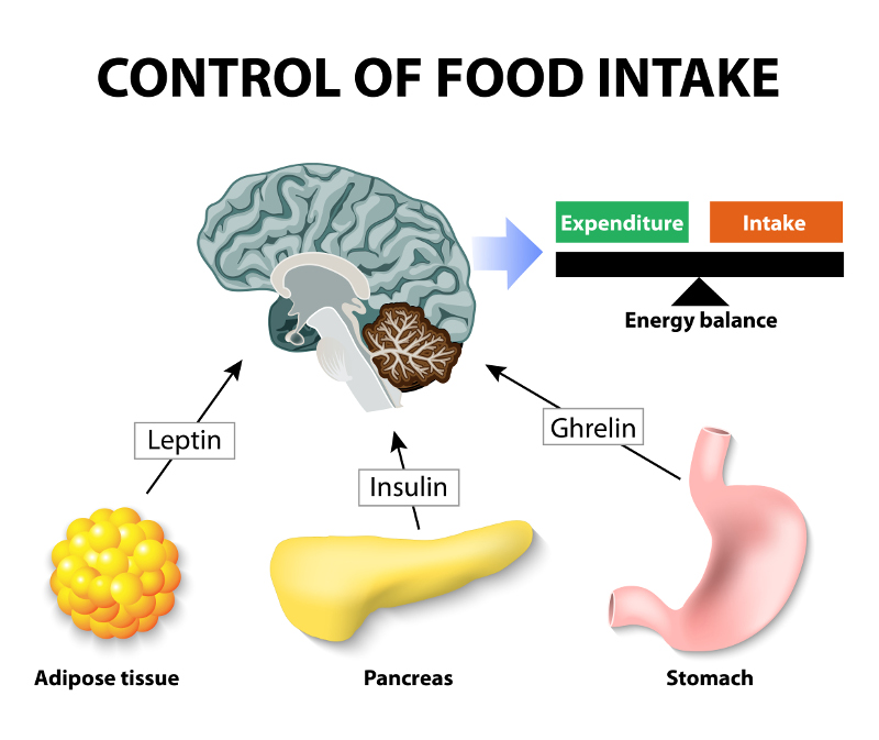 Control of food intake. Human hormones. Leptin, insulin and Ghrelin. Leptin and the regulation of energy balance