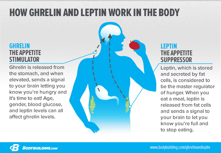 ghrelin-and-leptin-infographic