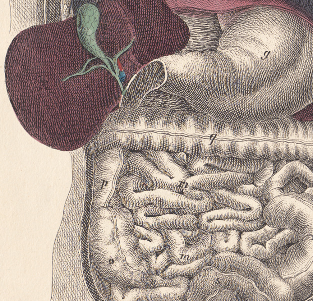 Getting to Know your Intestinal FloraSQ